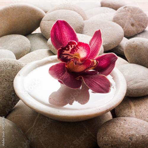 ciemnorozowa-orchidea-na-tle-szarych-kamieni