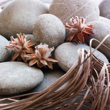 Dried Plants With Zen Pebbleszen Mineral Background