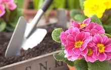 Blumen Umtopfen Im Garten IV