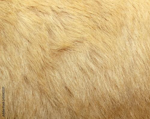 detail of polar bear fur Wall mural