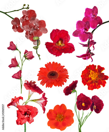 Papiers peints Pansies set of nine red color flowers isolated on white