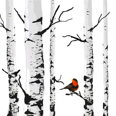 FototapetaBird of birches, vector drawing with editable elements.