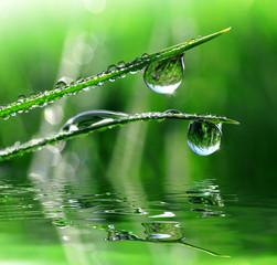 Panel Szklany Podświetlane Woda Krople Dew drops close up