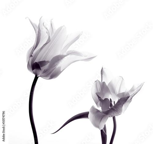 Stickers pour porte Tulip tulip silhouettes on white