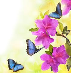 Plakat fioritura di azalee con farfalle