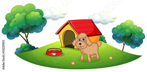 Poster Dogs A brown puppy playing ouside the dog house