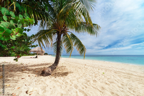 palm tree on a beach Canvas Print