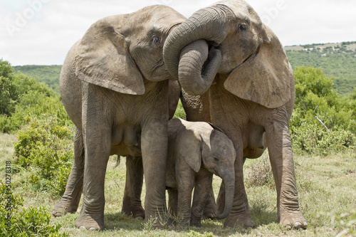 Fotobehang Olifant Elephant affection