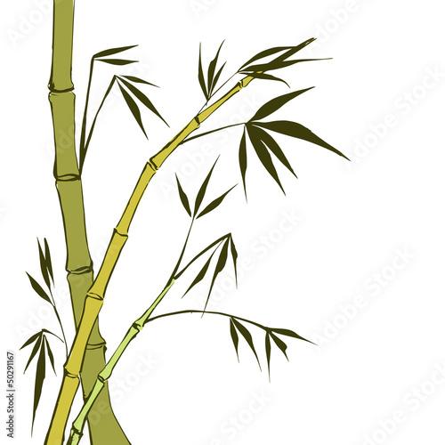zielone-lodygi-bambusa