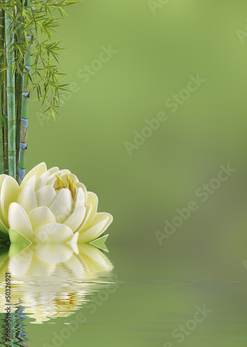 Poster Waterlelies fond décor asiatique
