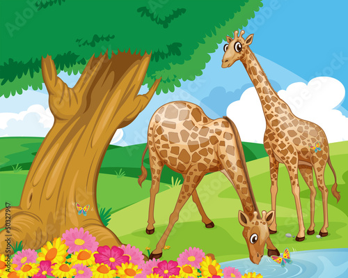 Canvas Prints River, lake Giraffes at the riverbank