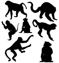 Seven Isolated Monkey Silhouet...