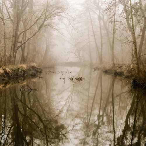Spoed Foto op Canvas Bos in mist Misty Swamp