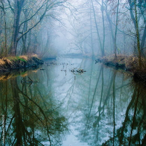 Photo sur Aluminium Foret brouillard Misty Swamp