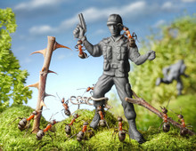 Ants Capture Terrorist - Toy Soldier, Ant Tales