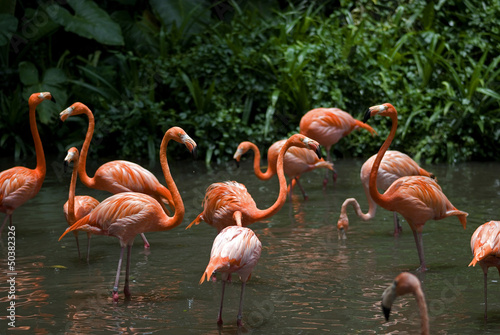 Flamingos, Jurong Bird Park, Singapore
