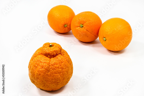 Valokuva  Orange Oddity