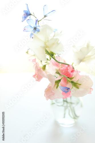 Fototapety, obrazy: elegant autumn flower, sweet pea