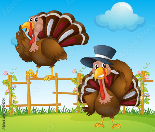 Wall Murals Birds, bees A turkey above the wooden fence and a turkey wearing a hat