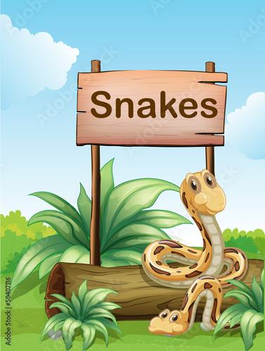 Foto op Aluminium Zoo Two snakes beside a wooden signboard