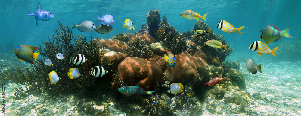 Fototapeta Coral reef underwater panorama with colorful tropical fish, Caribbean sea