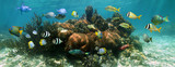 Coral reef underwater panorama with colorful tropical fish, Caribbean sea