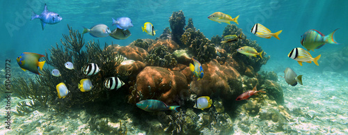Canvas Prints Under water Coral reef underwater panorama with colorful tropical fish, Caribbean sea