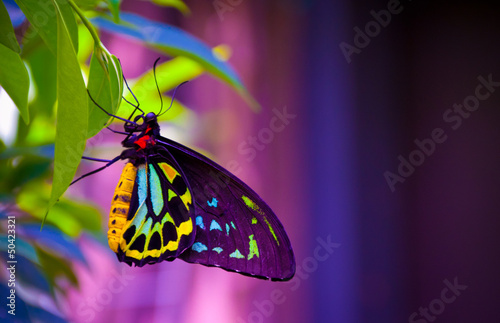 Cadres-photo bureau Papillon Neon butterfly