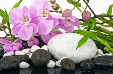 Fototapeta Storczyki Wellness Concept: orchids, bamboo, stone, water