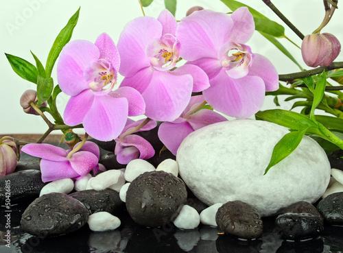 Orchideen mit Bambus und weißen und schwarzen Kieselsteinen - 50426815