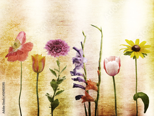 Flowers Background - 50483590