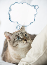 Cute Tabby Cat At Home - Laying On Sofa And Thinking, Blank Ball