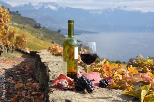 Fototapety, obrazy: Wine on the terrace vineyard in Lavaux region, Switzerland