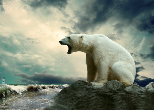 Spoed Foto op Canvas Ijsbeer White Polar Bear Hunter on the Ice in water drops.