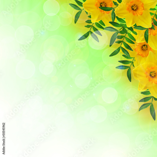 Garden Poster Narcissus Daffodils and leaves