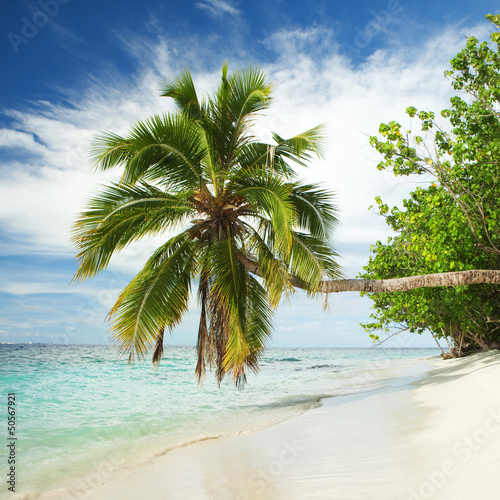 Foto auf Gartenposter Strand tropical beach with palm tree
