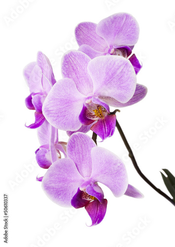 Keuken foto achterwand Orchidee Light purple orchid isolated on white