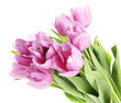 Beautiful bouquet of purple tulips, isolated on white