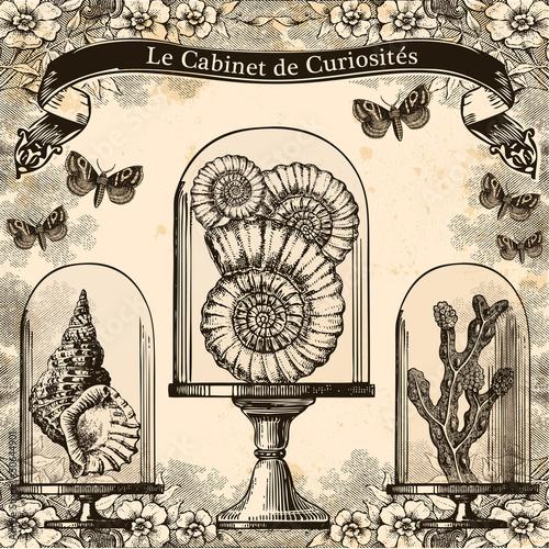Fotografía  Le Cabinet de Curiosités