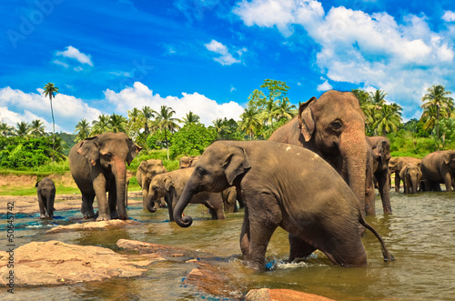 Photo  Elephant group in the river