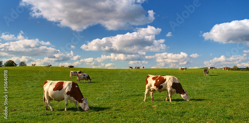 Cadres-photo bureau Vache VACHES AU PRE