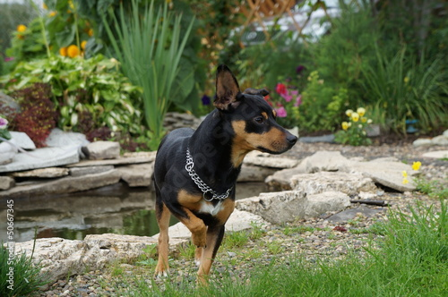 Пёс Tablou Canvas