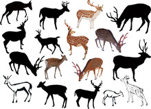 Seventeen Deers Collection