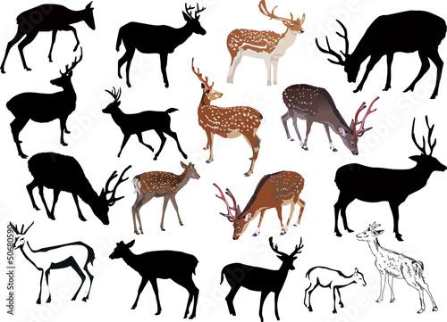 Fototapeta seventeen deers collection