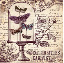 The Curiosities Cabinet