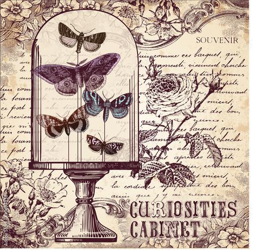 Spoed Foto op Canvas Vlinders in Grunge The Curiosities Cabinet