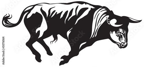 Valokuva  Bullfighting bull