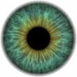 canvas print picture - Pupille