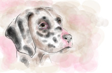 Dalmatian Dog Aquarelle Painting Imitation