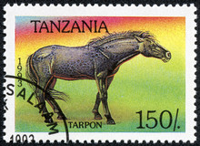 Stamp Printed In Tanzania Show...